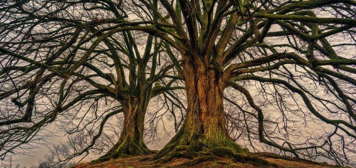 Die drei Bäume